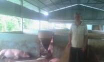 Tiền Giang: Tỉ phú nuôi lợn