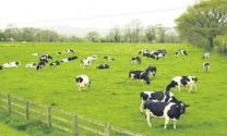 Vinamilk mở rộng quy mô trại bò sữa tại Thanh Hóa