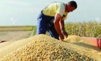 Trung Quốc: Nhập khẩu 5,3 tỷ USD đậu tương Mỹ