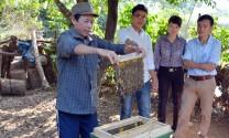 """Quảng Bình: Nuôi ong """"chống"""" phá rừng"""