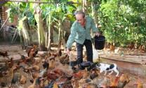 Bà Rịa - Vũng Tàu: Hiệu quả từ mô hình nuôi gà an toàn sinh học