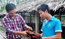 Trang trại gà Huỳnh Thương