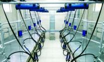 Hệ thống vắt sữa bò tự động Parlour