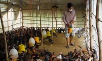 Xuất cấp hóa chất phòng chống dịch bệnh trên vật nuôi