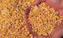 Bình Định: Đầu tư xây dựng nhà máy thức ăn gia súc 120 tỷ đồng