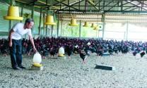 Thận trọng chăn nuôi cuối năm