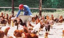 Nhật Bản: Tiếp cận Malaysia để hoàn thành mục tiêu xuất khẩu nông sản