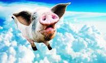Trung Quốc: Cường quốc thịt lợn của thế giới
