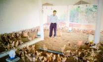Quảng Trị: Làm giàu bằng mô hình nuôi gà thả vườn
