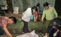 Ninh Thuận: Ninh Sơn hướng đến xây dựng khu giết mổ gia súc tập trung