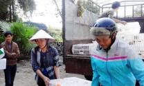 Bảo Thắng (Lào Cai): Cấp 5.700 con gà giống Đông Tảo cho hộ chăn nuôi