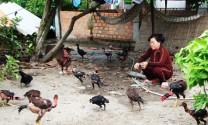 Vạn Ninh (Khánh Hòa): Chủ động phòng, chống dịch bệnh gia cầm