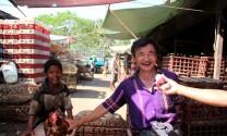Myanmar: Khống chế thành công dịch cúm gia cầm H5N1