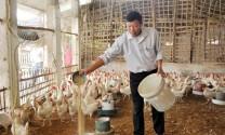 Lợi kép từ nuôi gà đẻ trên nền đệm lót sinh học