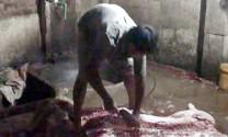 Đồng Nai: Thêm hai cơ cở giết, mổ heo lậu