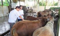Đồng Tháp: Tăng cường công tác quản lý giết mổ và vận chuyển gia súc, gia cầm