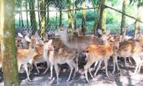 Khánh Vĩnh (Khánh Hòa): Nuôi thử nghiệm hươu, nai