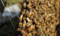Hà Giang: Hiệu quả từ mô hình nuôi ong lấy mật