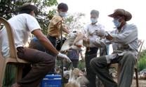 Bình Thuận: Tiêm phòng trên 1,7 triệu liều vắc xin cho gia súc, gia cầm