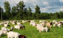 Hòa Bình: Tỷ trọng chăn nuôi đạt 26,4% cơ cấu nông nghiệp