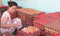 Long An: Nuôi gà công nghiệp lấy trứng gặp nhiều khó khăn