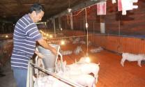Chăn nuôi sinh thái