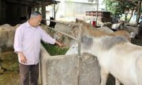 HTX ngựa bạch xóm Phẩm: Thu nhập bình quân của các hộ xã viên đạt trên 150 triệu đồng/năm.