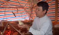 Hiệu quả từ chăn nuôi gà an toàn sinh học