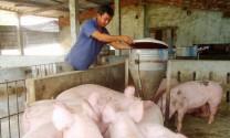 Nông dân chăn nuôi giỏi