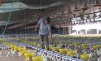 Tây Ninh: Tập huấn xây dựng vùng, cơ sở an toàn dịch bệnh đối với gia cầm