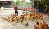 Nút thắt và giải pháp đầu ra cho gà thả vườn