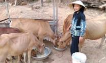 Đắk Lắk: Phòng ngừa dịch bệnh cho vật nuôi trong mùa khô