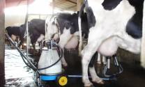 Thị trường sữa Việt Nam hy vọng sớm minh bạch