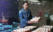 Bắc Ninh: Giá trứng giảm mạnh, người nuôi gia cầm lao đao