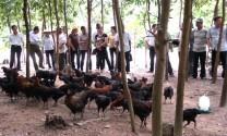 Nho Quan (Ninh Bình): Nhiều mô hình nuôi gà mang lại hiệu quả kinh tế