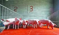 Chăm sóc, nuôi dưỡng và phòng trị bệnh cho vật nuôi vụ xuân, hè