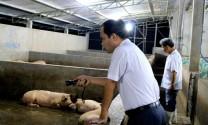 Ngành chăn nuôi tỉnh Bình Dương: Từng bước đẩy lùi chất cấm trong chăn nuôi