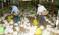 Nam Định: Kinh nghiệm phát triển chăn nuôi trang trại ở Hiển Khánh