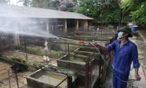 Hưng Yên: Thực hiện tiêu độc, khử trùng chăn nuôi