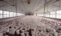 Bắc Giang: Thu tiền tỷ từ chăn nuôi trang trại
