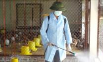 Hải Dương: Chủ động ngăn chặn dịch bệnh cho gia súc, gia cầm