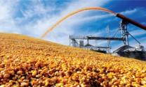 Gỡ nút thắt cho ngành thức ăn chăn nuôi