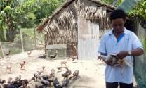 Giá gà nòi giảm khoảng 10.000 đồng/kg