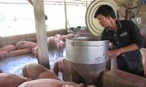 Ký cam kết chăn nuôi, giết mổ an toàn: Quản lý hiệu quả chất cấm trong chăn nuôi