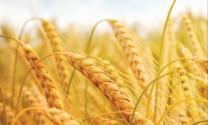 7 nguồn cung nguyên liệu nông nghiệp thô lớn nhất