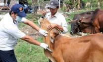 Bắc Giang: Hỗ trợ kinh phí tiêm phòng cho vật nuôi
