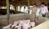 Cà Mau: Phòng, chống dịch bệnh vật nuôi trong giai đoạn chuyển mùa