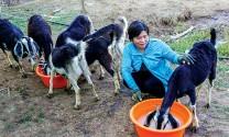 Đất Mũi (Cà Mau): Làng thoát nghèo nhờ nuôi dê