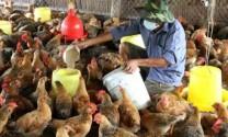 Quảng Nam: Phát triển kinh tế trang trại, gia trại