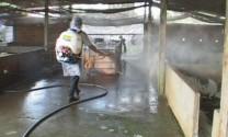 Huyện Chợ Gạo (Tiền Giang): Người chăn nuôi nói không với chất cấm